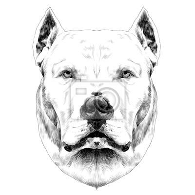 Disegno Cane Bianco E Nero.Poster Razza Di Cane Dogo Testa Guardando A Destra Sketch Grafica Vettoriale