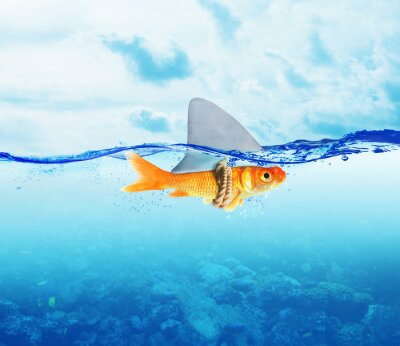 Poster Red Fish come squalo