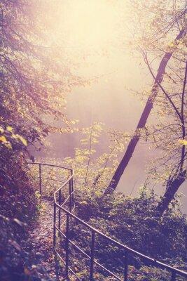 Poster Retro filtrato immagine di un sentiero nella foresta.