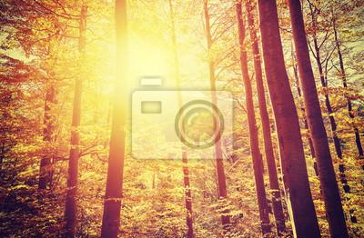 Poster Retro tonica immagine di bosco autunnale al tramonto.