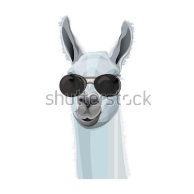 Poster Ritratto comico di lama in occhiali neri. Illustrazione vettoriale isolato su sfondo bianco
