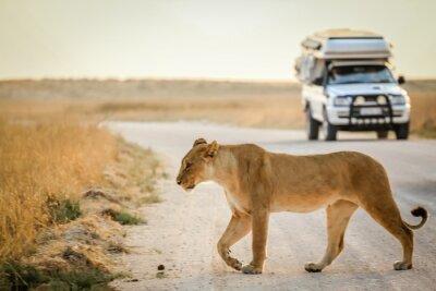 Poster safari africano