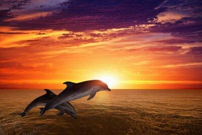Poster Saltando i delfini