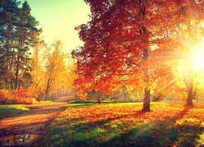 Poster Scena di autunno. Autunno. Alberi e foglie in luce del sole
