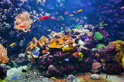 Poster Scena subacquea con i pesci, barriera corallina
