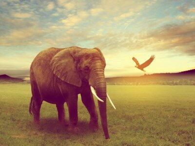 Poster scenario tra cui un elefante africa