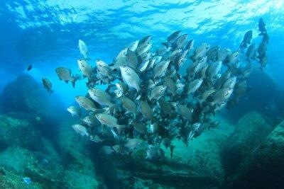 Poster Scuola di pesce sulla barriera corallina subacquea in mare oceano