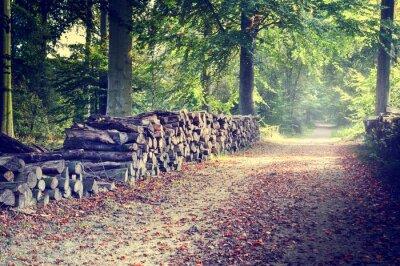 Poster Sentiero nella foresta di autunno