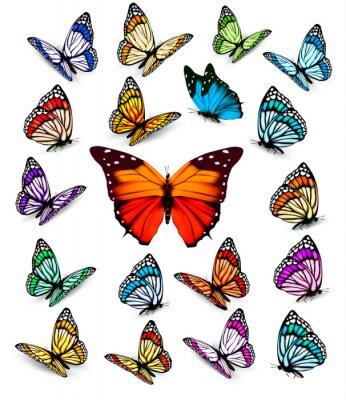 Poster Set di diverse farfalle colorate. Vector.