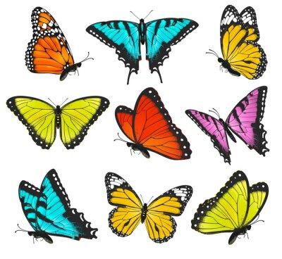 Poster Set di farfalle colorate illustrazione
