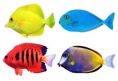 Poster Set di fishs mare tropicale