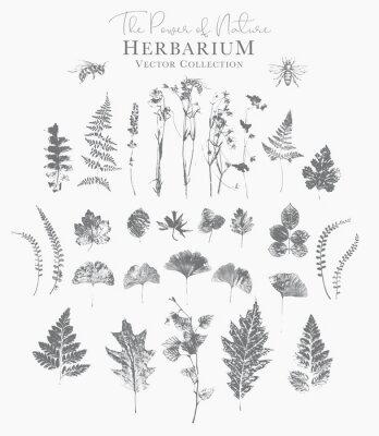 Poster Set of dried herbs and natural plants and bees - herbarium logo collection on white background