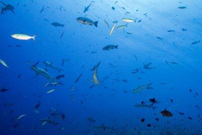 Poster squalo grigio pronto ad attaccare sott'acqua