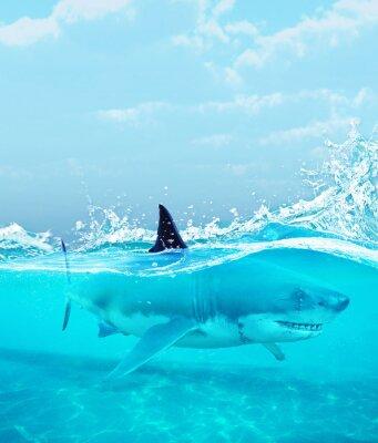 Poster Squalo sotto acqua, illustrazione 3d