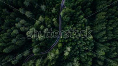 Poster Strada stretta tra i boschi, vista del drone