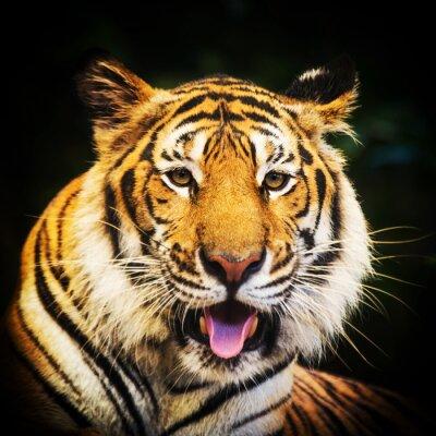 Poster Tiger ritratto di una tigre del Bengala.
