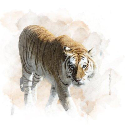 Poster Tiger Walking