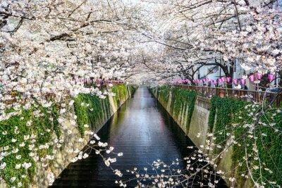 Poster Tokyo, Giappone Meguro canale in primavera.