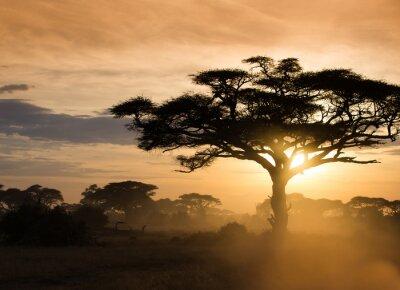 Poster Tramonto nella savana africana