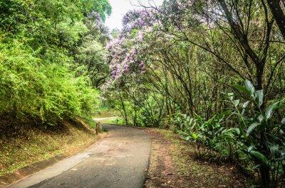 Poster trilha entre árvores em um parque em São Paulo