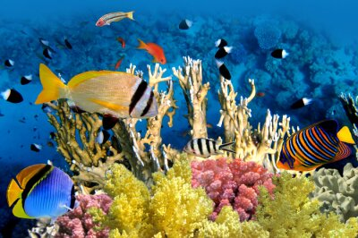 Poster Tropical Fish e Coral Reef