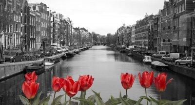 Poster tulipani rossi in amsterdam