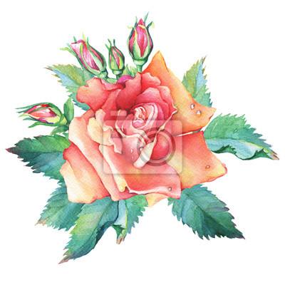 Un Bel Fiore Rosa Giallo Rosso Con Boccioli E Foglie Verdi Disegno