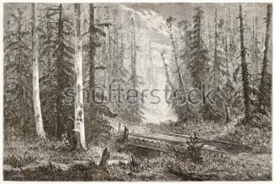 Poster Vecchia illustrazione della foresta russa dell'abete. Creato da Moynet, pubblicato su Le Monde du Tour, Parigi, 1867