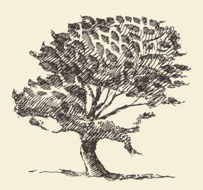 Poster Vecchio albero illustrazione d'epoca schizzo disegnato a mano