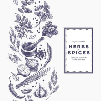 Poster Vector background con erbe e spezie disegnati a mano.