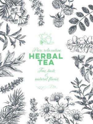 Poster Vector hand drawn tea herb Illustration.