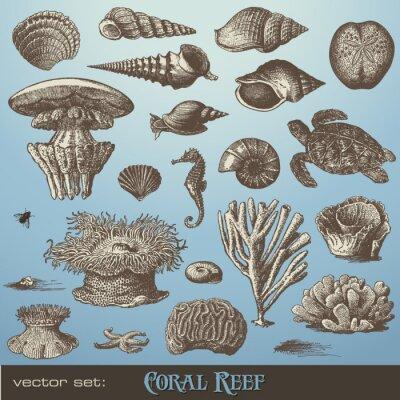 Poster Vector insieme: barriera corallina - varietà di elementi di mare-design