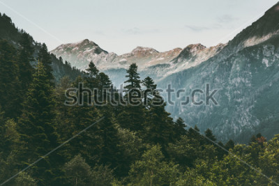 Poster Verde sereno di estate del paesaggio di viaggio del paesaggio delle montagne e della foresta di conifere