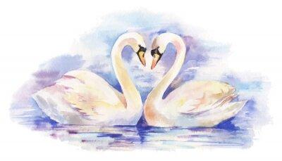 Poster vettore acquerello illustrazione della coppia di cigni bianchi