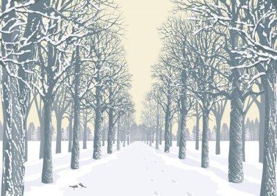 Poster Vicolo con alberi innevati sagome in un parco