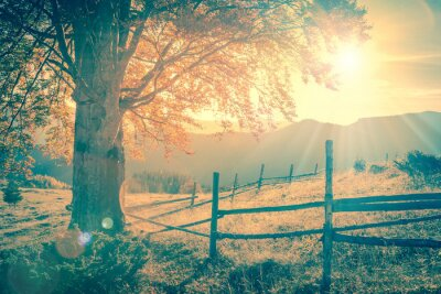 Poster Vintage autumn tree at sunset with sunbeams, mountains