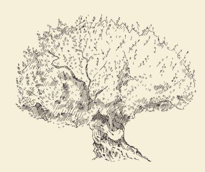 Poster Vintage d'oliva sfondo disegnato a mano illustrazione