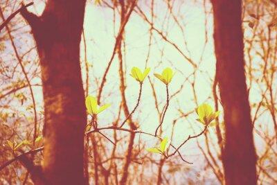 Poster Vintage foresta