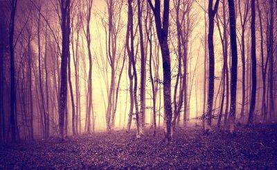 Poster Vintage giallo chiaro mistica di colore viola nel paesaggio forestale spaventoso.
