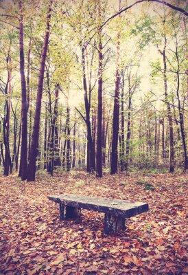 Poster Vintage immagine filtrata di panchina in una foresta.