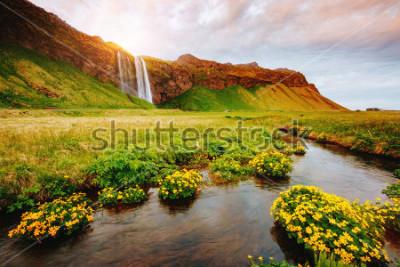Poster Vista adorabile del campo verde di fioritura al sole. Scena drammatica e meravigliosa. Attrazione turistica popolare Posizione luogo famosa cascata Seljalandsfoss, Icelanda, Europa. Scopri il mondo de