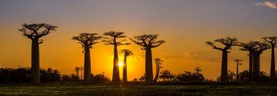 Poster Vista di panorama al tramonto sopra Baobab viale