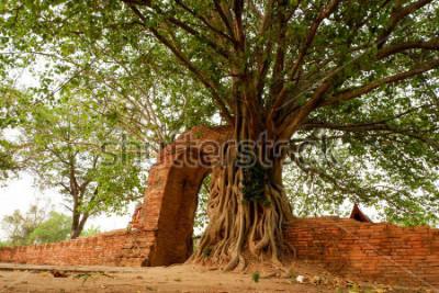 Poster Wat Phra Ngam (abbandonato) Ayutthaya Porta del tempo L'arco è avanzato dal pho.