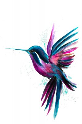 Poster Watercolor Hummingbird flying and isolated on white background. Rainbow bird. Tropical colibri watercolor illustration.