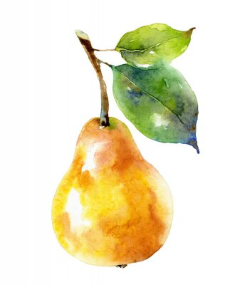 Poster Watercolor yellow pear isolated on white background
