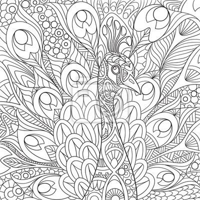 Zentangle Pavone Cartone Animato Stilizzato Con Bellissime Piume