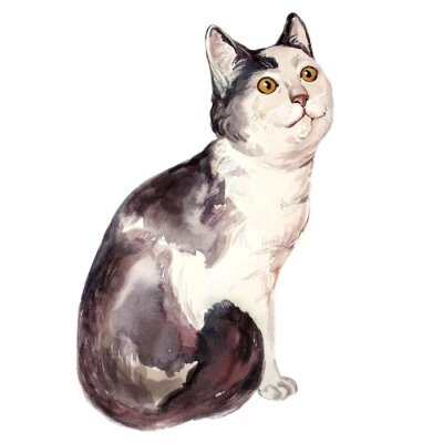 Quadro Acquarello illustrazione di brutto gatto confuso
