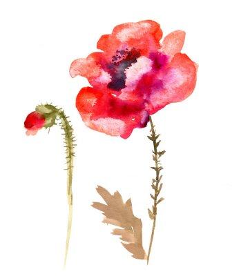Quadro Acquerello fiore di papavero