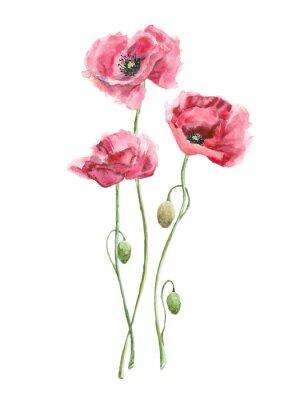 Quadro acquerello fiori rossi (papaveri)