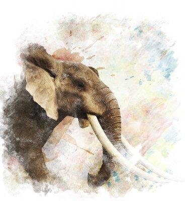 Quadro Acquerello Immagine Di Elefante